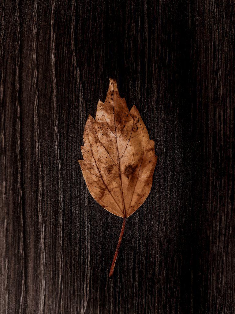 Yellow leaf on a dark oak